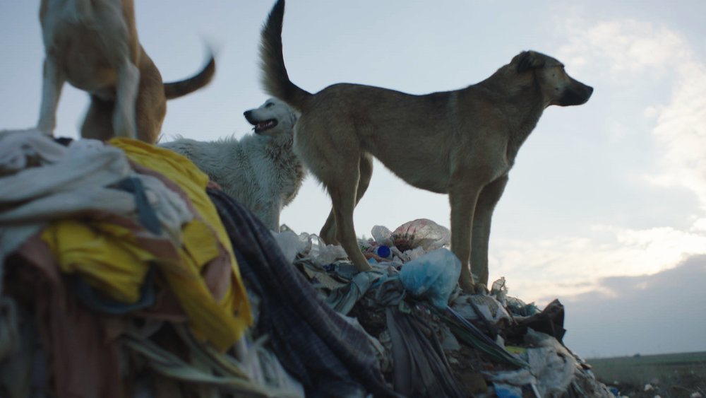 """""""Stray"""" Trailer! A Documentary On The Over Population Of Stray Dogs In Istanbul And A Look Into The Lives Of Three Dogs !"""