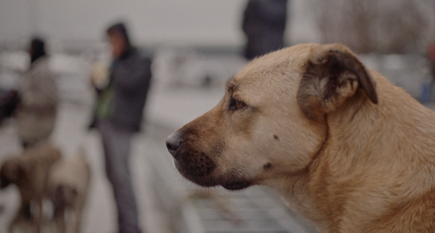 """Stray"" Trailer! A Documentary On The Over Population Of Stray Dogs In Istanbul And A Look Into The Lives Of Three Dogs !"